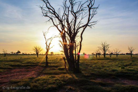 Fotosafari - Kenia - Afrika: Sonnenaufgang