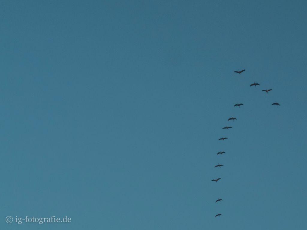 Der Flug der Kraniche zum Sonnenaufgang