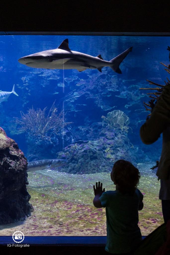 Hai-Aquarium-Berlin-8