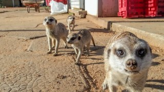 Wildlife-Volunteering-Namibia-11