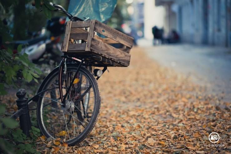 Herbst-in-Stadt-5