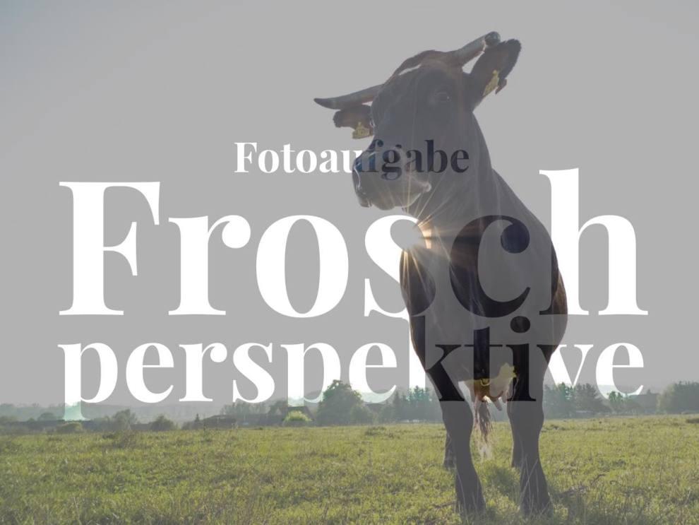 fotoaufgabe-froschperspektive