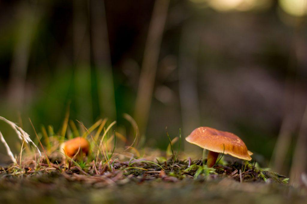 Pilze sind ein großartiges Foto-Motiv im Herbst - achte auf die Perspektive!