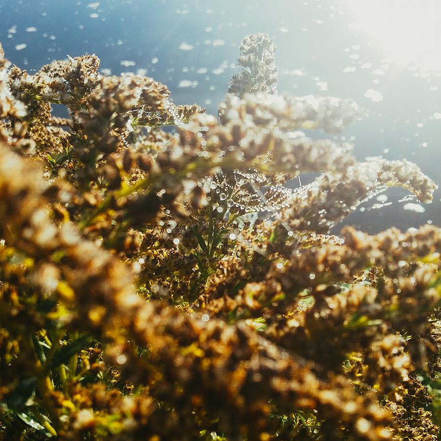 Naturfotografie mit dem Smartphone: 98 kreative Tipps und Tricks