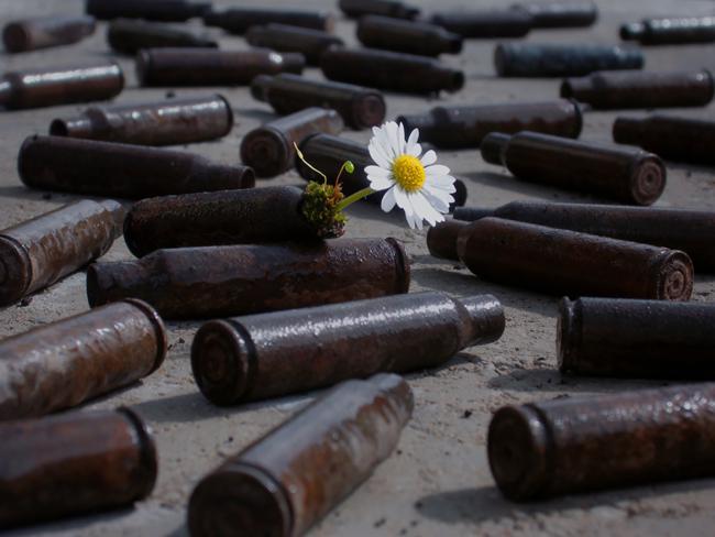 flower-tree-growing-concrete-pavement-105