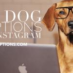 40 Dog Captions For Instagram Dog Lovers On Instagram