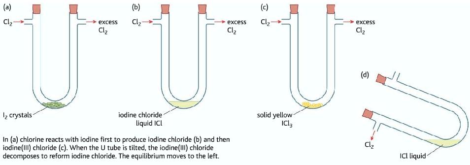 dynamic equilibrium example