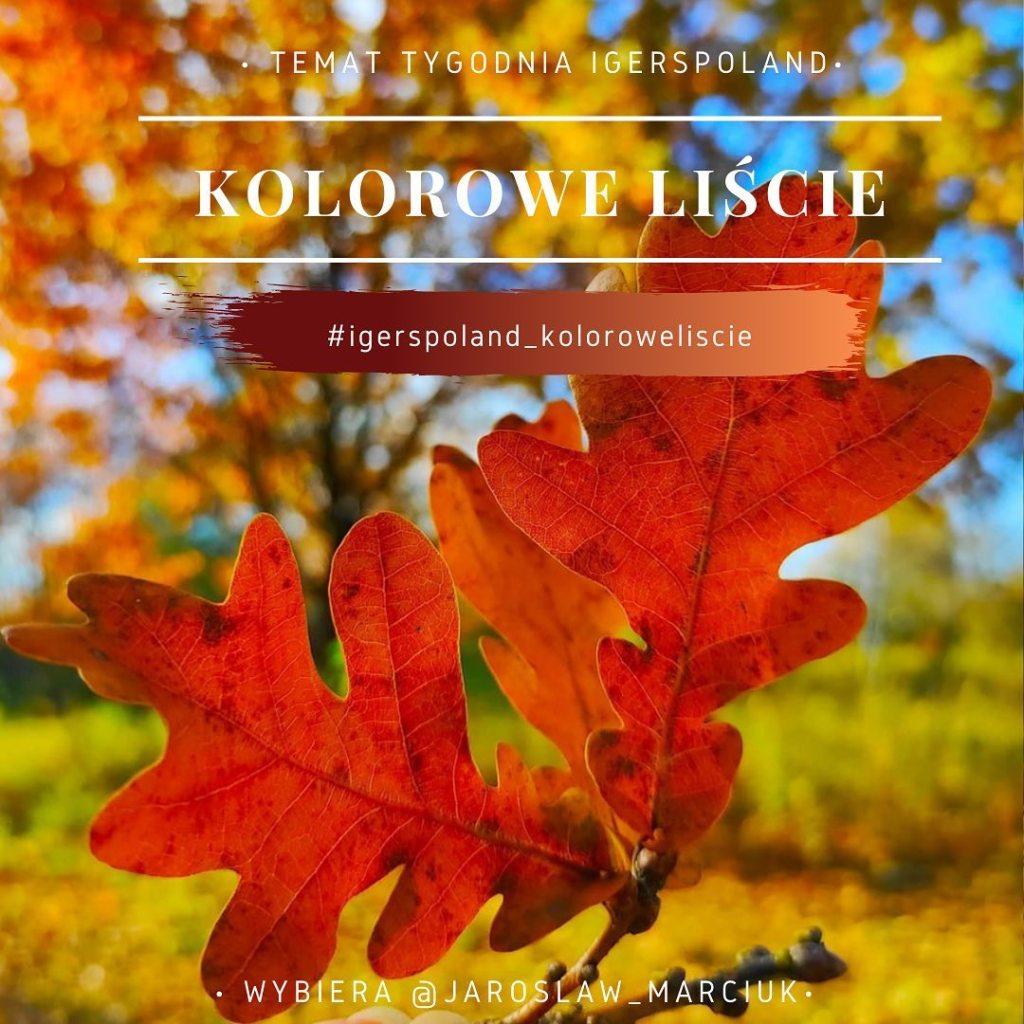 złota polska jesień na Instagramie konkurs zdjęcia