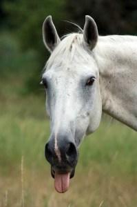 horse barn pet peeves