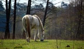 horse-1328890_1920