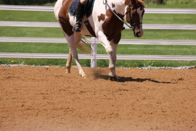 faq horse arena footing, dust free horse arena footing, idk equestrian, litestride, trustride