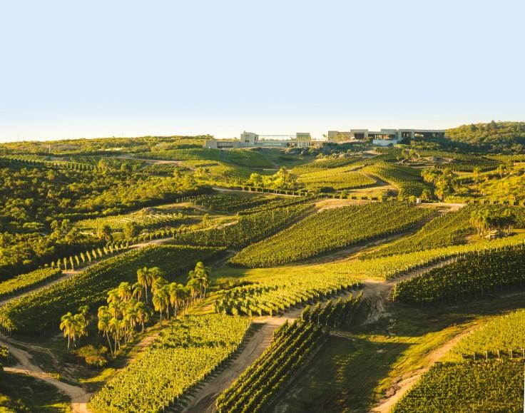 BodegaGarzón-vineyards
