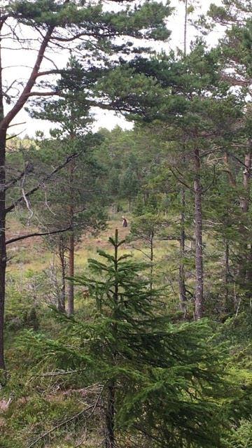skogstur