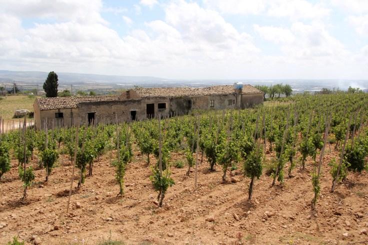 vinmark_gulfi_sicilia