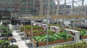 Loyola University Chicago's Ecodome, a 3,100 square foot greenhouse, is used in sustainable food systems research projects as well as urban agriculture production. [SOURCE: Loyola University Chicago]