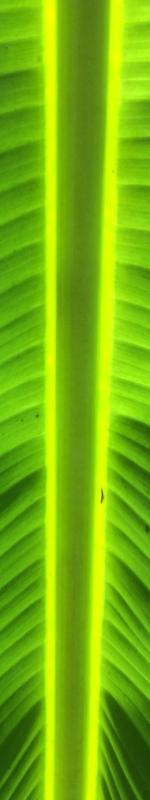 leaf-image-saint-francis-prayer
