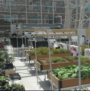Loyola's Ecodome, a 3,100 square foot greenhouse, is used in sustainable food systems research projects as well as urban agriculture production. [SOURCE: Loyola University Chicago]