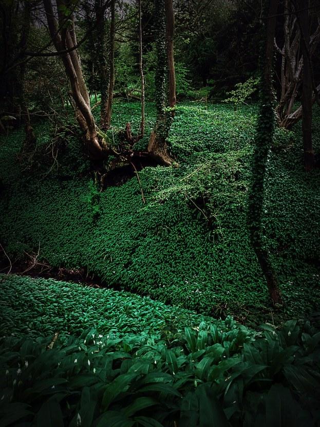 Garlic Woods 1