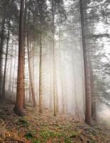 Fog-like