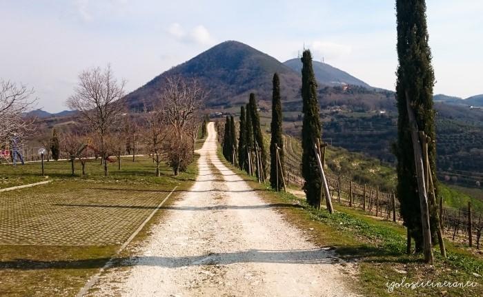 Nel cuore dei Colli Euganei: i vini dell'azienda Monteversa