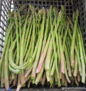 Asparagi verdi appena raccolti presso l'azienda agricola Gatti di Zelarino