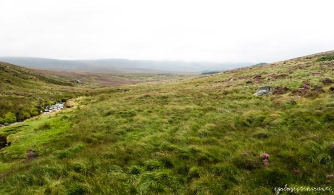 Brughiera, Wicklow Mountains (Irlanda)