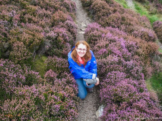 Erica in fiore, Howth (Irlanda)