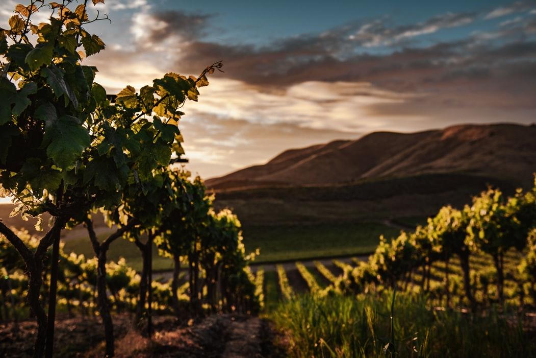 Friuli-Venezia Giulia: scopriamo i vini del Collio