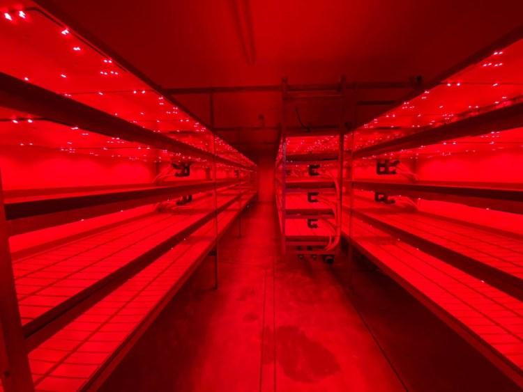 Low Energy LED Urban Farm Reaseheath College