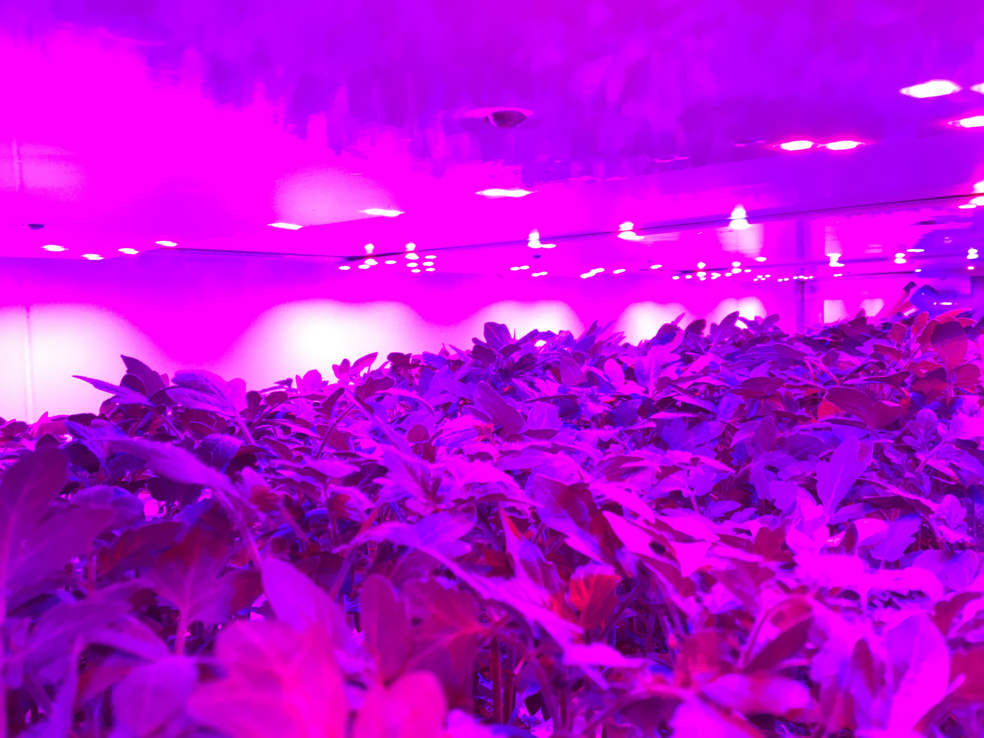 Reaseheath College Vertical Farm LED Lighting System