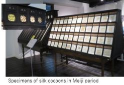 Tuat M- Silk x2.JPG