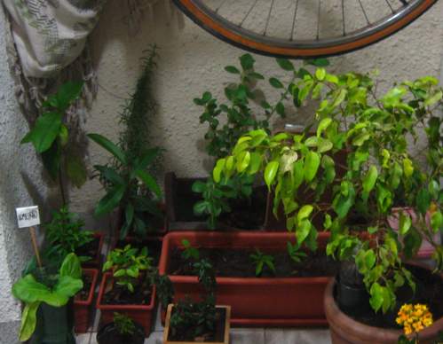 horta de apartamento 04