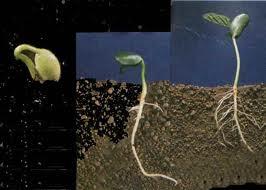 Tohumculuk Kanunu çiftçiyi çok uluslu şirketlere bağımlı kılıyor/ Yazı Dizisi 4 (1/2)