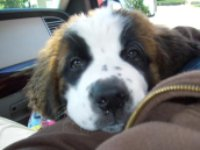 Sophia Puppy