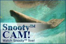 Snooty Cam graphic