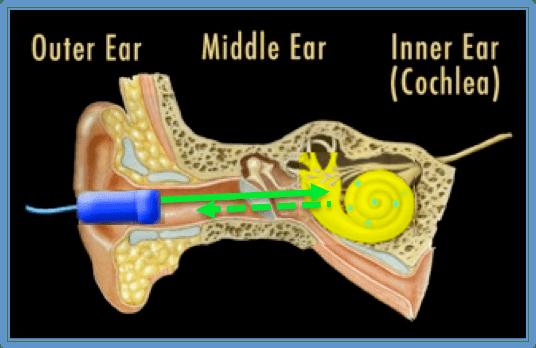 Inner Ear Diagram December Probes Amp Tips Understand Basic Ear Anatomy And