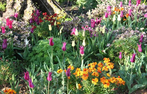 The High Desert Gardener (Moana Nursery's September