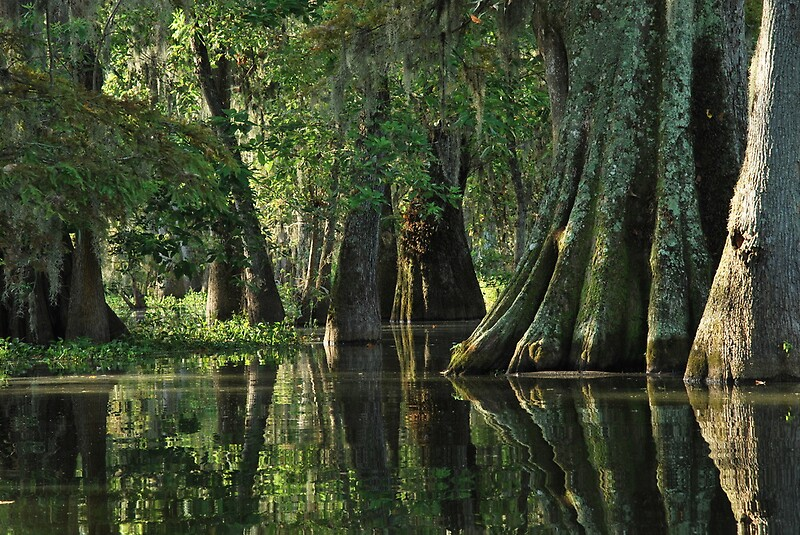 Florida State Iphone X Wallpaper Quot Louisiana Bayou Quot By Linda Trine Redbubble