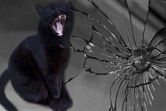 Image result for black cat and a broken mirror