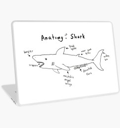 anatomy of a shark laptop skins by moveslikekeef redbubble [ 1000 x 1000 Pixel ]