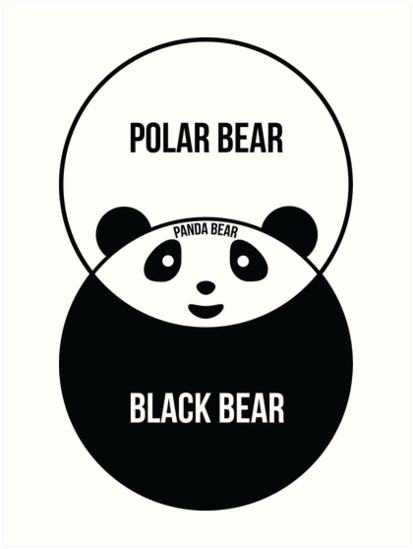 panda bear diagram deciduous forest food chain venn art prints by offensivefun redbubble