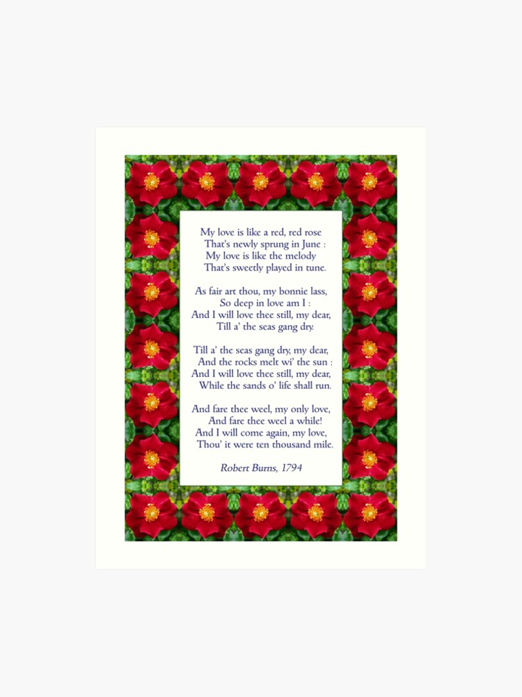 Download Latest Love Like A Rose - family quotes