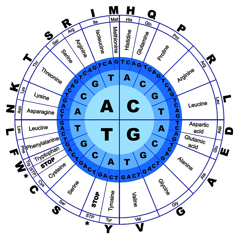 Mrna Codon Chart Circle