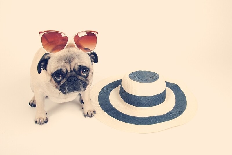 Pugs Summer By NJMphotography Redbubble