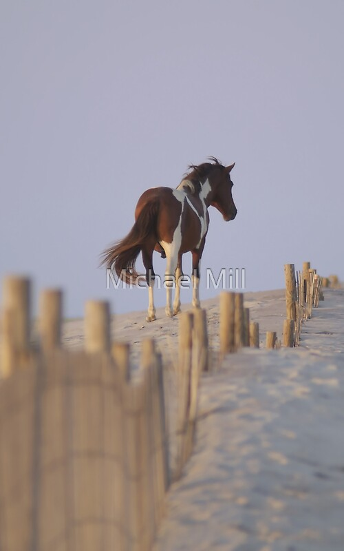 Wild Pony of Assateague Island by Michael Mill  Redbubble