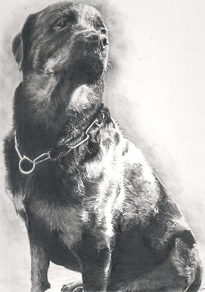 Rottweiler Pencil Drawing By Onlypencil Redbubble