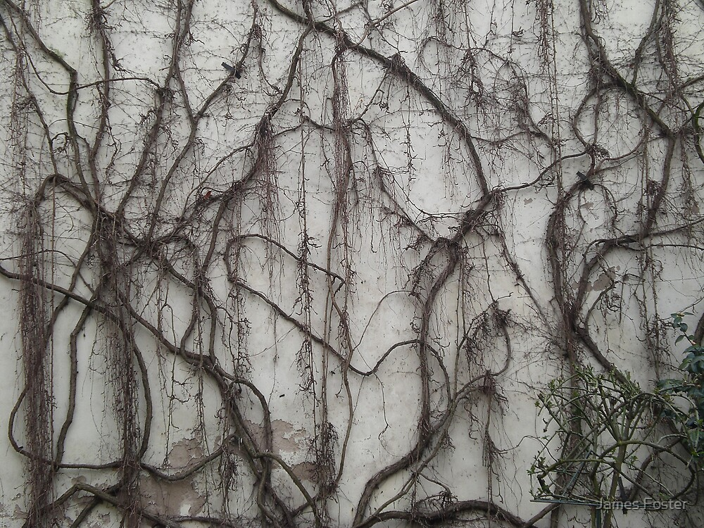 Dead Vines by James Foster  Redbubble