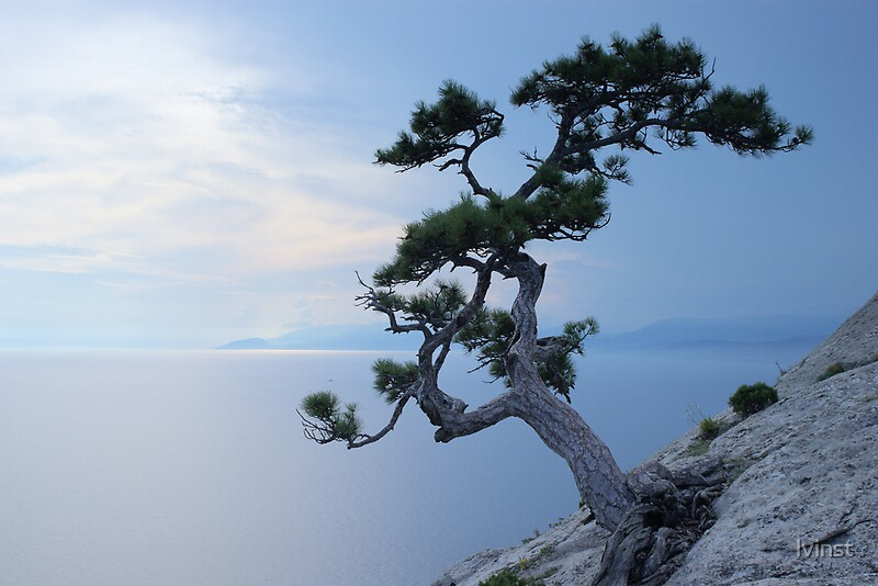 Alone tree on the cliff by lvinst  Redbubble