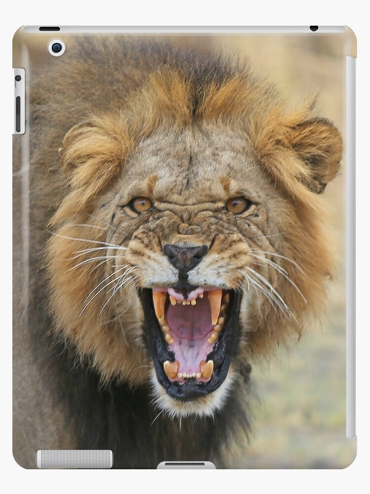 angry lion ipad cases