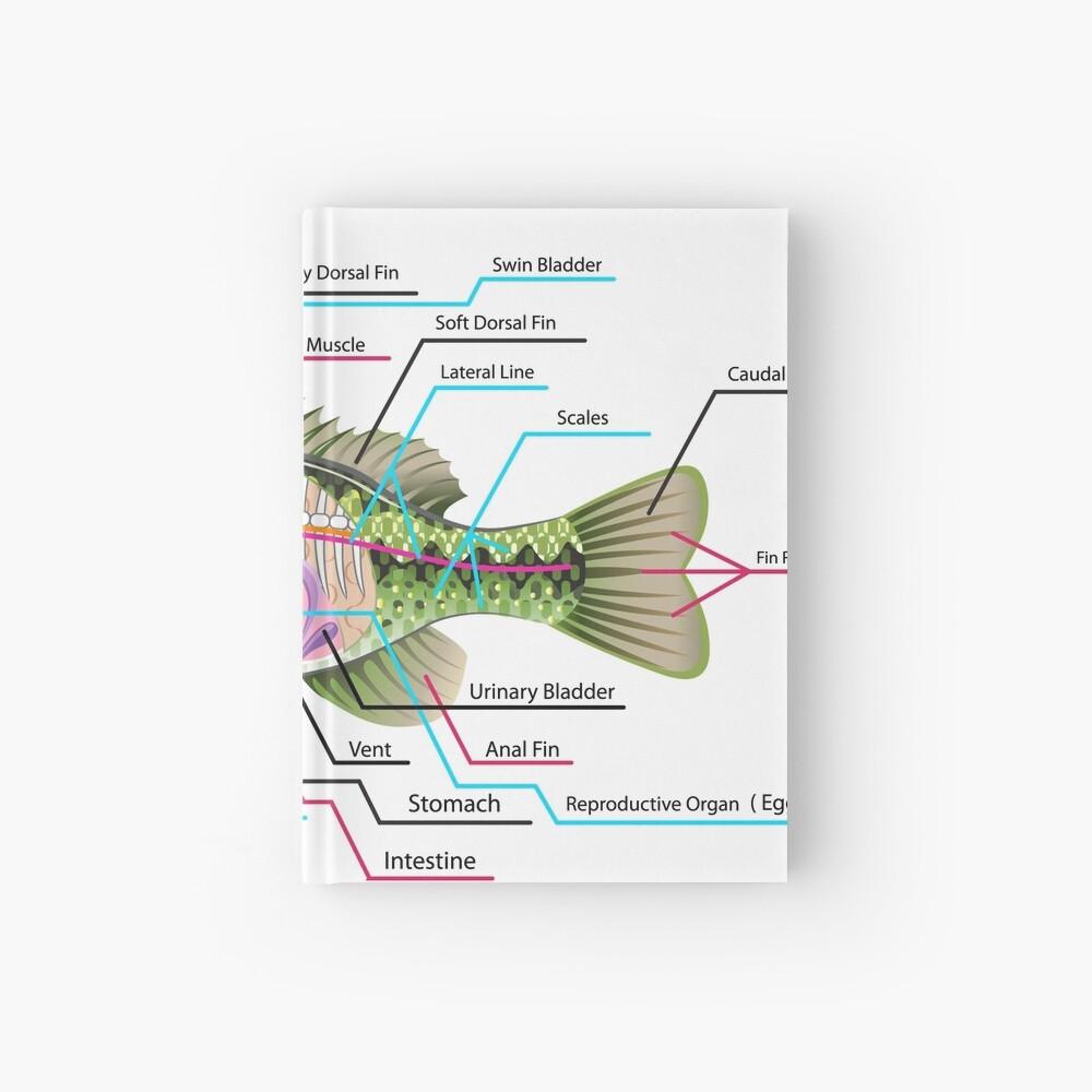 medium resolution of fish organs labeled open bass hardcover journal